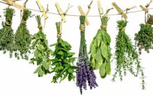 Травы от повышенного холестерина в крови и очищающие сосуды