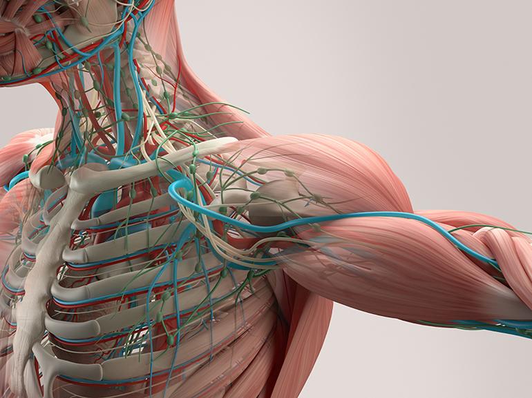 Нарушенный процесс кровоснабжения любой мышцы тела.