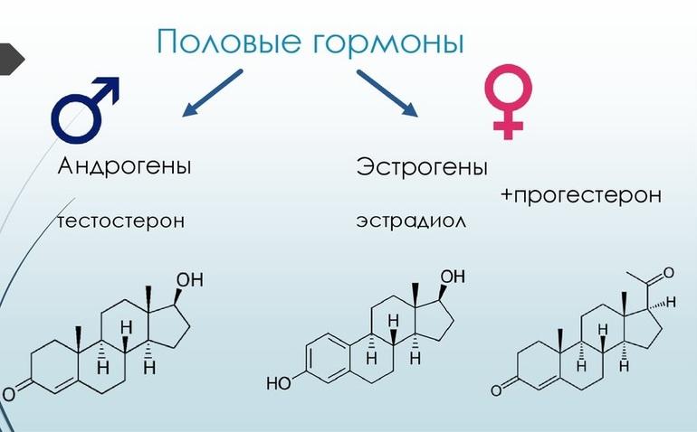 Половые гормоны