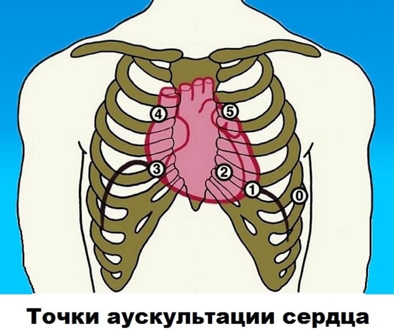 картинка аускультация сердца с точками