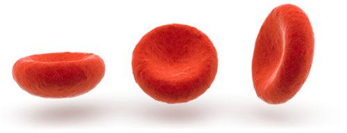 эритроциты в крови норма