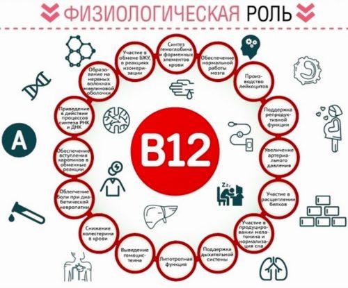 rol-vitamina-b12