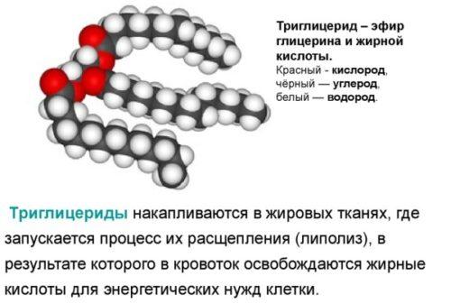 Triglitseridy