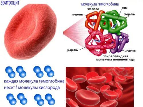 Повышен гемоглобин в крови у подростка thumbnail