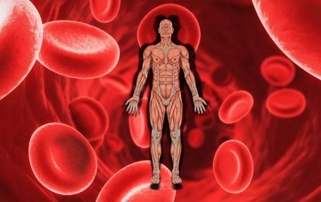 Уровень железа в организме