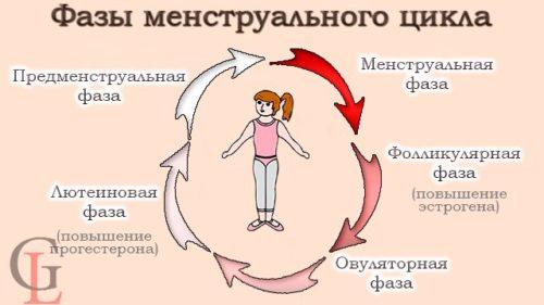 fazy cykla