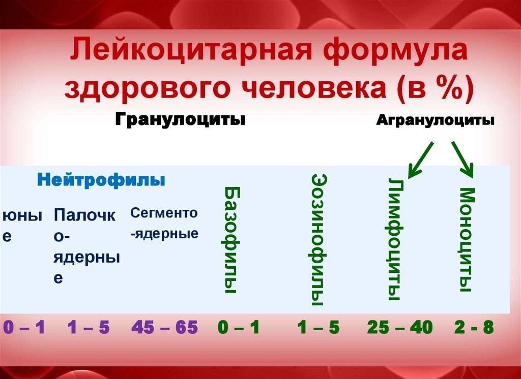 Картинки и описания лейкоцитарной формулы