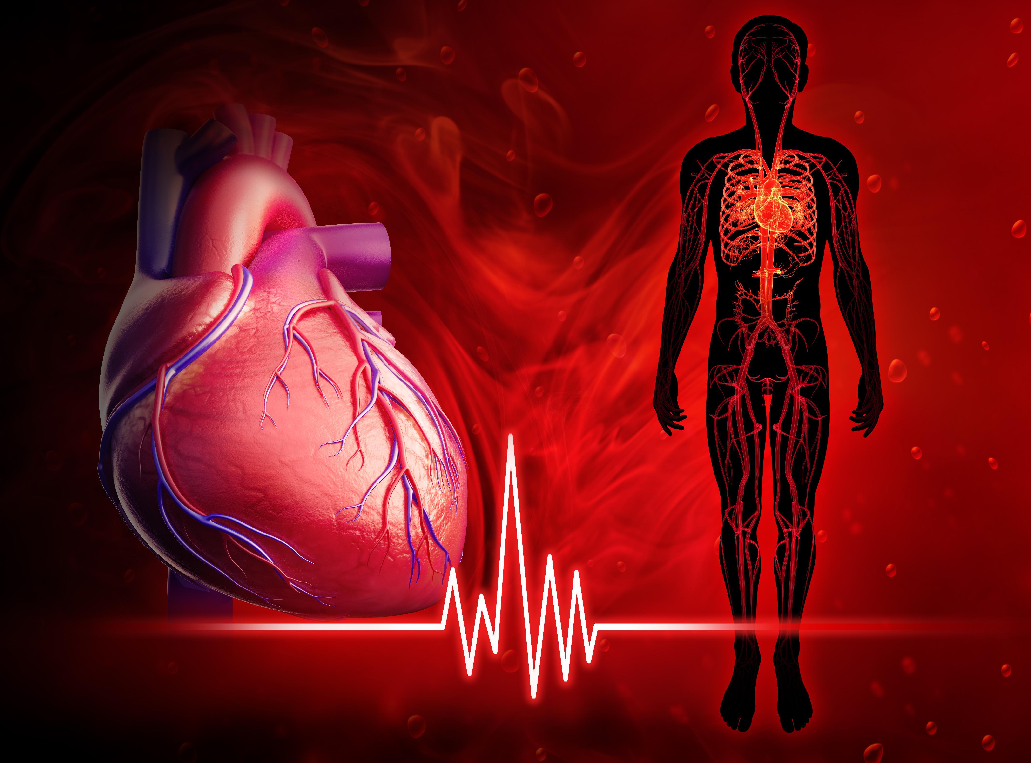 Почему сильно бьётся сердце