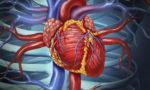 кровоснабжение сердца