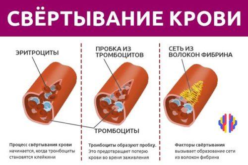 Белки участвующие в свертывании крови